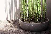 Home / Garden Design
