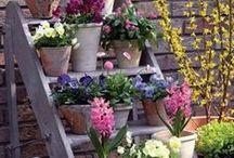 Creative Flower Planters & Pots