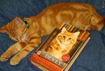 Pets Reading / What's cuter than kitties and puppies reading?!?