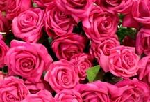 - Flores para todos -