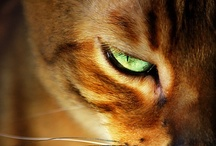 Crazy About Cats / Cat Art and Photos