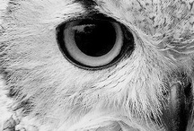 Owls : Art, Photography, and More