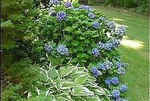 Landscaping Ideas / beautiful flowers, trees, and landscaping materials to improve your curb appeal.