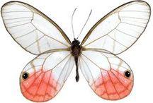 Vleugels & Vlinders / Beadies loves Wings & Butterflies. Mooie vleugels en vlinders om inspiratie op te doen.