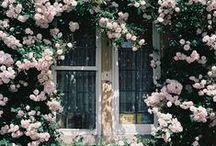 Garden, flowers & etc.