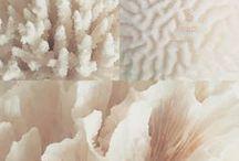 Koraal Coral / koraal coral