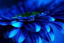 Blue..blu..bloo..