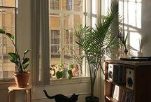 rooms + bangin windows