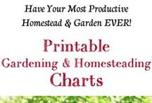 Organizing the Homestead / Tips for keeping things organized on our Homestead