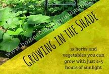 Gardens Big and Small / Ideas and tips for everything from starting, maintaining and harvesting from your garden.