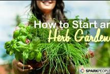 Homemade Herbs, Spices and Seasonings / Learn how to plant, grow, harvest, dry and cook with herbs and spices