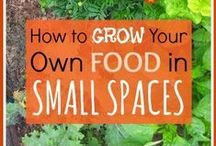 Urban Homesteading / You don't need a lot of space to Homestead!  Ideas, tips and tricks for homesteading in an urban environment