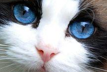 Blue eyed beauties..