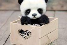 Cute Animals / FOLLOW ME ON- INSTAGRAM-ii__.suhani.__ MUSICAL.LY-ii__.suhan.__