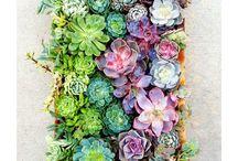 dj's succulents / Plants