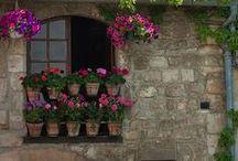 Flowers, Gardening & Outdoor Spaces
