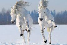 ⭐️Paarden/Horses