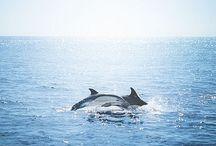 ⭐️Dolfijnen/Dolphins