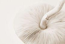 ⭐️Paddestoelen/Mushrooms