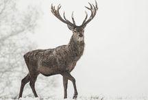 ⭐️Herten/Deer
