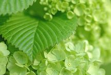 ⭐️Groen/Green