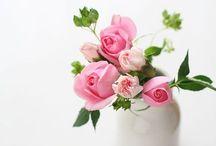 ⭐️Rozen/Roses
