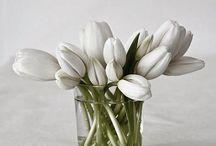 ⭐️Tulpen/Tulips