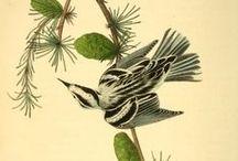 Illustrations scientifiques / Illustrations scientifiques, planches anatomiques ou botaniques, cartographie...