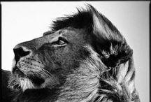 Animaux du monde / Animaux du monde, Animals, animaux sauvages, vie sauvage