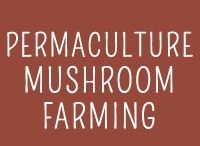 Permaculture - Mushrooms / Growing and cultivating your own mushrooms!