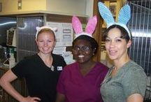 Easter Fun / Some pictures of staff and pets getting their bunny on !