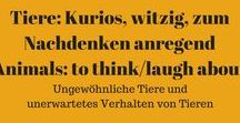 Tiere: Kurioses, witziges, zum Nachdenken anregendes - Animals - to think or laugh about it / Tierisches, das zum Nachdenken anregt, nicht immer mit einem Schmunzeln. +++ All about animals - to think about diverse themes. Often, but not only with humor.  #Tiere #animals #Humor #Witzig #LOL