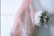 Funny + Cuteness / by Monique Tieleman | No22