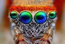 Macro Insects / by David Hitch