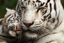 Animal world´s love