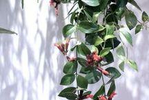 Mama Petula - L'appartement Sezane - plant styling - Paris. / Décoration végétale créée par Mama Petula Plant styling Interior Design www.mamapetula.com