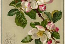 flowers/natuur/botanisch