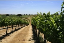 destinations / by Bianchi Winery