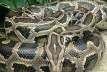Reptiles & housings