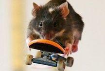 Skateboard / =)