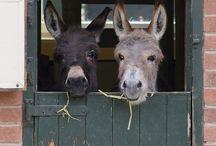 Donkeys / Donkeys