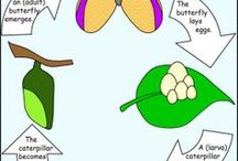 LIFE CYCLES - Science / Explore, illustrate, and compare life cycles in living organisms