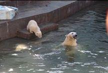 Зоопарк / Новосибирский зоопарк