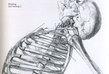 anatomia illustrata