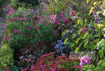 Gardens n plants
