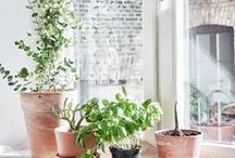 GREEN LIFE / Welcome to the urban jungle: Plants, flowers and even trees can make your home much more cozier – and don't forget all the other natural decoration elements.