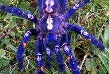 Arachnid/Insects/Invertebrates