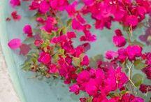 Flowers & Leaves / by Marilou Mangan