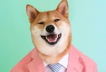 Menswear Dog's Looks / Do You. Style is about wearing things with confidence. If it doesn't make you feel good, don't wear it.  / by Menswear Dog