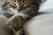My Totem-Kitty Kitty
